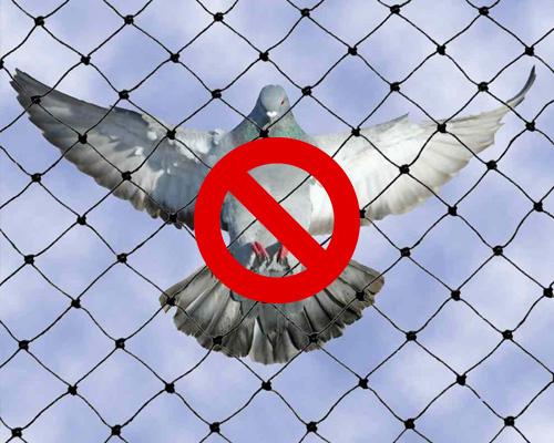 Anti Bird Net, Anti Bird Net Suppliers, Anti Bird Net